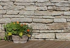 金莲花在木材褐色地板上的一个石花盆开花 库存图片