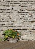 金莲花在木材褐色地板上的一个石花盆开花 免版税图库摄影