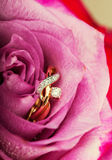 金金刚石在美丽的桃红色玫瑰的定婚戒指 免版税库存照片