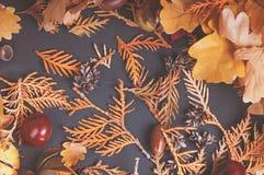 从金钟柏的干燥分支的背景 免版税库存图片