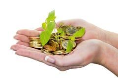 金钱和植物。标志照片救球 库存照片