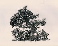 金钱弯曲的树 免版税库存图片