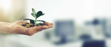 金钱投资企业成功概念 有硬币和植物的手 免版税库存照片
