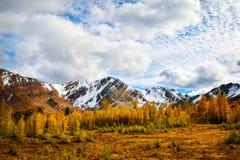 金钱松和斯诺伊山不列颠哥伦比亚省,加拿大 库存照片
