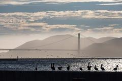 金门桥在日落的旧金山 库存照片