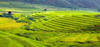 金露台的米调遣与阳光在Mu Cang柴,越南 免版税图库摄影
