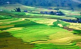 金露台的米调遣与阳光在Mu Cang柴,越南 免版税库存图片