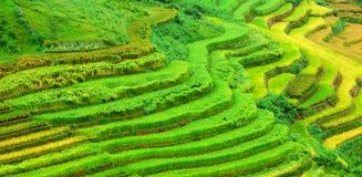 金露台的米调遣与阳光在Mu Cang柴,越南 免版税库存照片