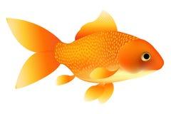 金鱼向量 免版税库存图片