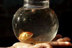金鱼在手边 免版税库存图片