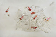 金鱼游泳在水族馆中透明水在一许多的透明玻璃盘中:堆试管,烧瓶, g 免版税库存图片
