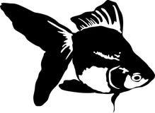 金鱼 免版税库存照片