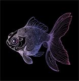 金鱼llustration的颜色图画 海洋动物的图画 向量例证