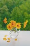 金鸡菊 玻璃水罐和黄色花花束  免版税库存图片