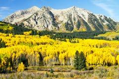 金黄亚斯本在科罗拉多高国家 库存照片