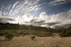 金黄加利福尼亚的丛林 库存图片