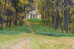 金黄发光的槭树在秋天 免版税库存照片