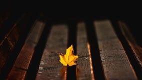 金黄叶子在阳光下 库存照片