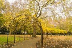 金黄叶子隧道在伦敦公园在秋天 免版税图库摄影