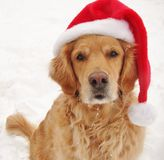 金黄圣诞老人 免版税库存图片