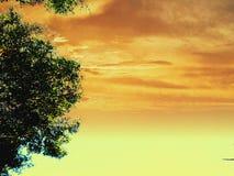 金黄天空绿色树 免版税库存照片
