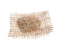 金黄奎奴亚藜 在黑森州的织品,被隔绝的白色backgr的五谷 免版税库存照片
