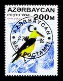 金黄奥廖拉诺(猎户流星群猎户流星群),鸟serie,大约1996年 库存图片