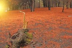 金黄女低音萨克斯管在埃特纳火山的脚的森林里 T 免版税库存照片