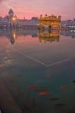 金黄寺庙 图库摄影