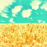 金黄成熟麦子的领域 免版税库存照片