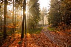 金黄日出在森林 免版税库存图片