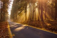 金黄日出在森林 库存照片