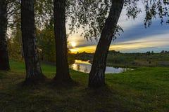 金黄日落和云彩通过桦树 库存图片