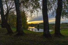 金黄日落和云彩通过桦树 免版税库存照片