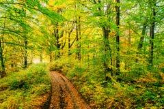 金黄早晨太阳在绿草在秋天发出光线 背景美好的做的本质向量 库存照片