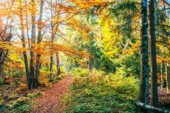 金黄早晨太阳在绿草在秋天发出光线 背景美好的做的本质向量 免版税库存照片