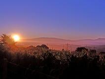 金黄有薄雾的日落 免版税库存图片