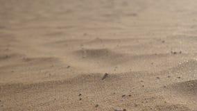 金黄沙子闪烁在阳光下和它由一阵强风吹去 影视素材