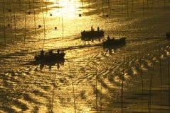 金黄海边 图库摄影