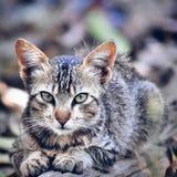 金黄猫 库存照片