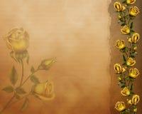 金黄玫瑰 库存照片