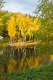 金黄白桦树在公园` s湖反射他们的图象 免版税库存照片
