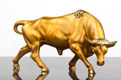 金黄的公牛 图库摄影