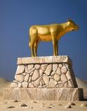 金黄的小牛 库存图片