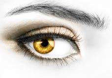 金黄的眼睛 库存照片