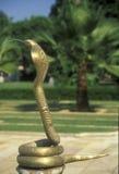 金黄的眼镜蛇 免版税图库摄影