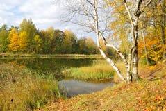 金黄的秋天 库存图片