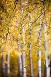 金黄的秋天 免版税库存照片