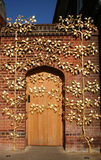 金黄的门道入口 库存照片