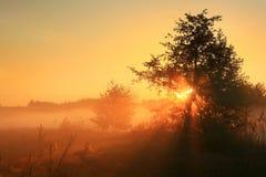 金黄的黎明 图库摄影